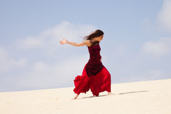 Flamenco in the dunes Stock Images