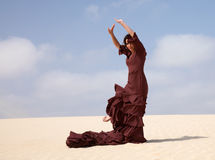 Flamenco in the dunes Royalty Free Stock Photo