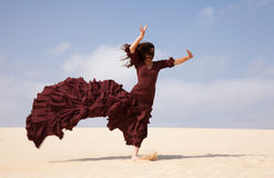 Flamenco in the dunes Stock Image