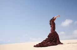 Flamenco in the dunes Stock Photos