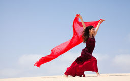 Flamenco in the dunes Stock Photos