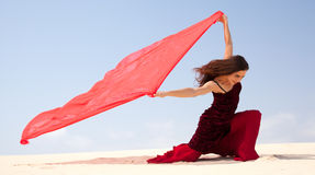 Flamenco in the dunes Royalty Free Stock Images