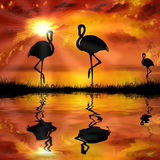 flamenco en un fondo hermoso de la puesta del sol