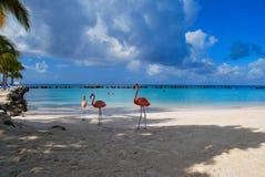 Flamenco en una playa Fotografía de archivo libre de regalías