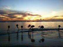 Flamenco en una playa durante puesta del sol Foto de archivo