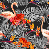Flamenco, hojas tropicales, flores exóticas Modelo inconsútil, fondo negro watercolor Fotografía de archivo
