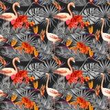 Flamenco, hojas tropicales, flores exóticas Modelo inconsútil, fondo negro watercolor Fotos de archivo