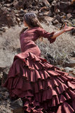 Flamenco in the malpais Stock Photography