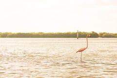 Flamenco por el río imagenes de archivo