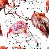 Flamenco rojo exótico en una fauna aislada Sistema del ejemplo del fondo de la acuarela Modelo inconsútil del fondo ilustración del vector