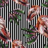 Flamenco rojo exótico en una fauna aislada Sistema del ejemplo del fondo de la acuarela Modelo inconsútil del fondo stock de ilustración