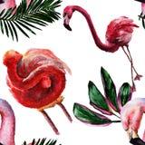 Flamenco rojo exótico en una fauna aislada Sistema del ejemplo del fondo de la acuarela Modelo inconsútil del fondo libre illustration