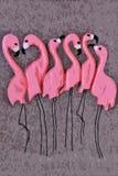 Flamenco rosado en cierre gris del fondo para arriba foto de archivo