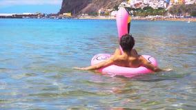 Flamenco rosado en la playa almacen de video