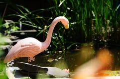 Flamenco rosado plástico en una charca del jardín del patio trasero Foto de archivo libre de regalías