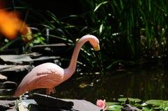 Flamenco rosado plástico en una charca del jardín del patio trasero Imagenes de archivo