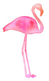 Flamenco rosado Silueta exótica dibujada mano del pájaro Foto de archivo