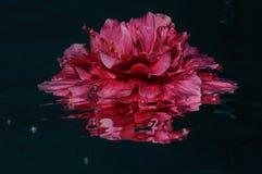 Flamenco-Teil zwei lizenzfreie stockfotografie