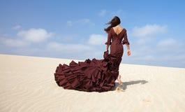 Flamenco w diunach Zdjęcie Royalty Free