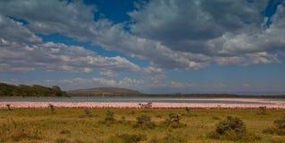 Flamencos en el lago Naiwasha, Kenia Fotos de archivo