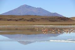 Flamencos en el Lagunas de Lipez, Bolivia Foto de archivo