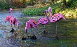 Flamencos en el río Imágenes de archivo libres de regalías
