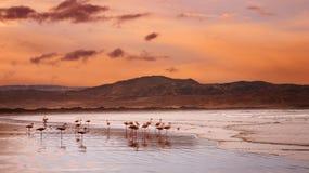Flamencos en la playa Imagen de archivo libre de regalías