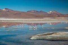 Flamencos en Laguna Colorada Foto de archivo libre de regalías