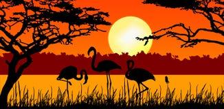 Flamencos en puesta del sol stock de ilustración