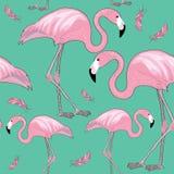 Flamencos rosados con los picos negros con las plumas rosadas alrededor de ellas Modelo inconsútil Ejemplo del vector en fondo de Imagen de archivo