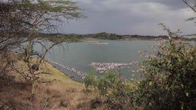 Flamencos rosados en el lago almacen de metraje de vídeo