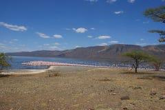 Flamencos rosados en la reserva nacional de Bogoria del lago, gran Rift Valley, Kenia, África imágenes de archivo libres de regalías