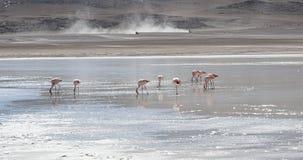 Flamencos rosados en Laguna Honda en ` profundo de la laguna del ` inglés en el reserva Eduardo Avaroa - Bolivia de Lipez Altipla fotografía de archivo libre de regalías