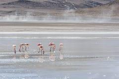 Flamencos rosados en Laguna Honda en ` profundo de la laguna del ` inglés en el reserva Eduardo Avaroa - Bolivia de Lipez Altipla imagen de archivo