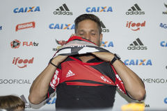 Flamengo Royaltyfri Bild