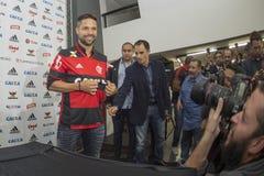 Flamengo Royaltyfri Foto