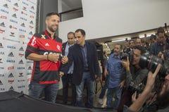 Flamengo Royaltyfri Fotografi