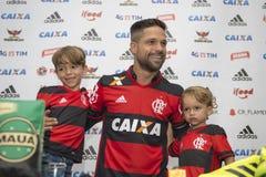 Flamengo Royaltyfria Foton