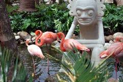 Flamengos在池塘 免版税库存照片