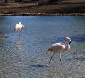 flamengos湖 库存图片