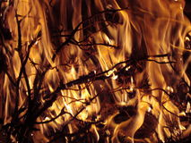 Flames. Fire burning and devouring pine twigs Royalty Free Stock Photo