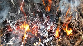 Flames and ashes of burnt wood Royalty Free Stock Images