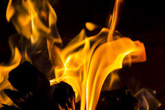Wood burning on a fire Royalty Free Stock Photography
