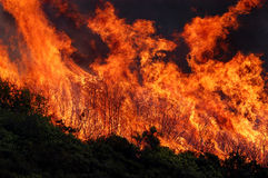 Flames and brush. Vegitation fire in the foothills of Mendocino County, California Stock Photo