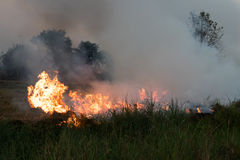 Flames burned grass. Flames and smoke from burning stubble in the rice fields, which cause global warming Royalty Free Stock Images