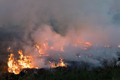Flames burned grass. Stock Photography