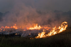 Flames burned grass. Flames and smoke from burning stubble in the rice fields, which cause global warming Stock Image