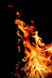 The flames, burning fire. Isolated on black background Stock Image