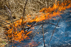 Flames from burning grass. Burning dry grass and spreading smoke from the fire Stock Photography