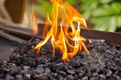 Flames on the coal Royalty Free Stock Photography